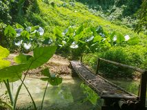 在豪华的植被的老挝琅勃拉邦Nahm东公园暗藏的桥梁 图库摄影
