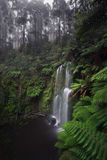在豪华的雨林的Beauchamp瀑布 库存照片