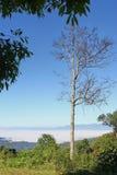 在豪华的绿叶中的一棵唯一干燥树 免版税库存图片