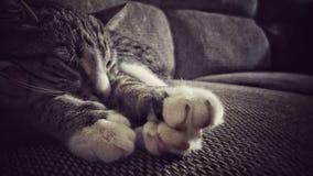 在豪华长沙发的困猫 免版税库存图片