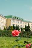 在豪宅的背景的桃红色玫瑰 免版税库存图片