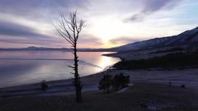 在贝加尔湖的鸟瞰图 有美丽的冰的Winter湖 在湖岸的赤裸偏僻的树 俄国冬天 Dron 股票录像