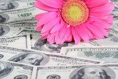 在货币的花 免版税库存照片