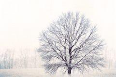 在贫瘠冬天风景的偏僻的孤零零树在帆布纹理 免版税库存图片