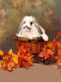 在购物车的兔宝宝 免版税库存照片