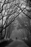 在走在公园的爱的夫妇在有雾的早晨 免版税库存照片
