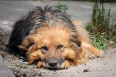 在走期间的狗 免版税库存照片