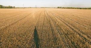 在走横跨一块巨大的麦田的年轻人游人的低飞行 股票视频