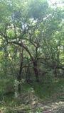 在走的足迹的树 免版税库存图片