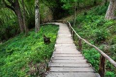 在走道下的木倾斜有扶手栏杆的在密林 库存照片