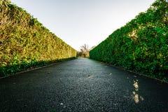 在走道下的树篱 免版税图库摄影
