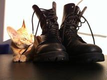 在起动猫使用的少女 免版税库存照片