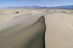 在起波纹的沙丘的Ridgeline 免版税库存照片