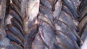 在超级市场细节的鱼 图库摄影