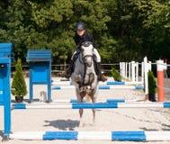 在超越障碍马术比赛竞争的女孩骑马软羊皮的小马 免版税库存照片
