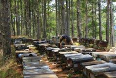 在越南的养蜂业 库存照片
