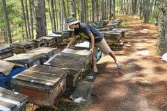 在越南的养蜂业 库存图片