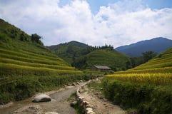 在越南西北部的参观 库存图片