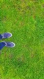 在足球场的绿草 免版税库存照片