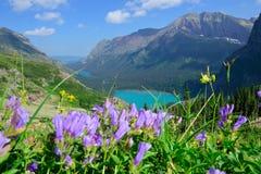 在足迹对Grinnell冰川和湖的野花在冰川国家公园 库存照片