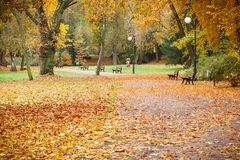 在足迹或小径的看法用桔子和黄色在秋季公园离开 免版税库存照片
