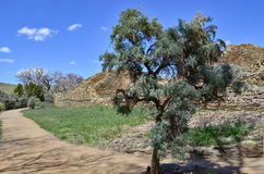 在足迹的古老鼠尾草在阿兹台克废墟 免版税库存图片
