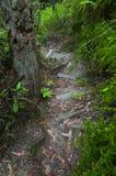 在足迹的木台阶 免版税图库摄影