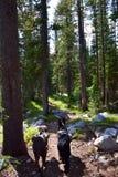 在足迹的狗在森林 库存图片