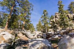在足迹的美国黄松对圣哈辛托山峰,加利福尼亚 免版税库存照片