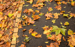 在足迹的金黄叶子 库存照片
