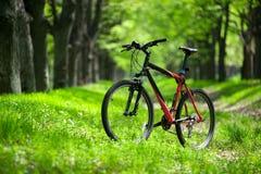 在足迹的登山车在森林里 免版税库存图片