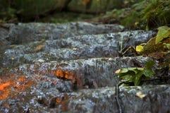 在足迹水黑暗森林的阳光 免版税图库摄影