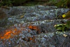 在足迹水黑暗森林的阳光 库存照片