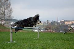 在跃迁的狗 免版税库存照片