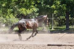 在跑马场的跑马在训练期间 图库摄影