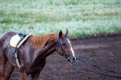 在跑马场的马 免版税库存照片