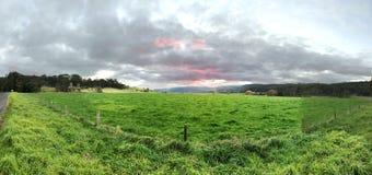 在距离的天空,近绿色草坪 免版税库存照片