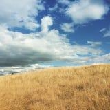 在距离高结束小山的蓝色风筝飞行在黄色草地 库存图片