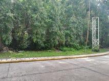 在路一边的树 免版税库存图片
