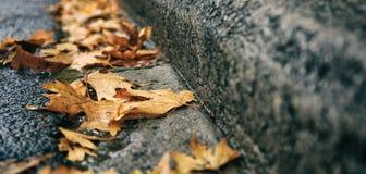 在路下落的槭树叶子秋天 免版税库存图片
