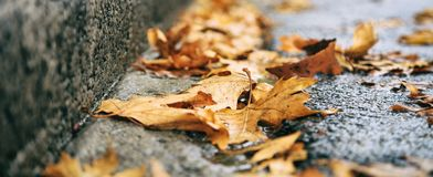 在路下落的槭树叶子秋天 库存照片