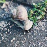 在路关闭的蜗牛照片 库存照片