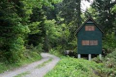 在路射击stad附近的林业 库存照片