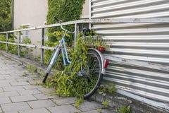 在路旁的停放的和长满的自行车 免版税库存图片