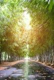 在路旁边的竹子 免版税库存图片