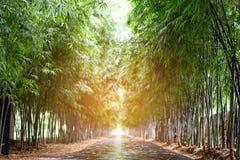 在路旁边的竹子 库存照片