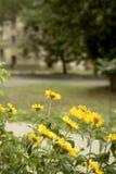 在路旁边的黄色花在夏天 免版税库存照片