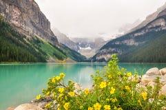 在路易丝湖,加拿大的黄色花 免版税库存照片