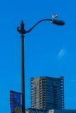 在路灯柱的海鸥 库存照片