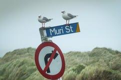 在路牌的海鸥 库存图片